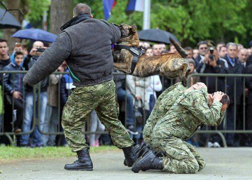 Allenamento cane poliziotto
