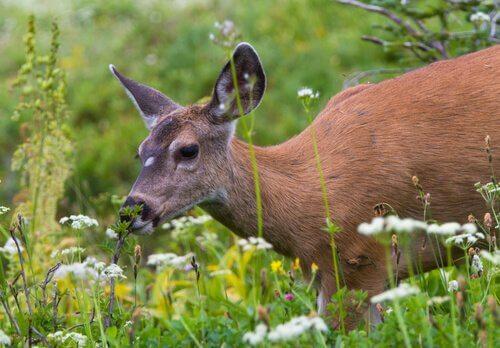 Animali e fiori: specie che si nutrono di fiori