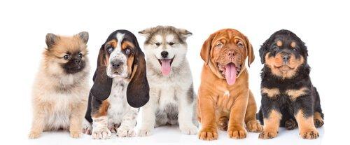 Come far socializzare i cuccioli?