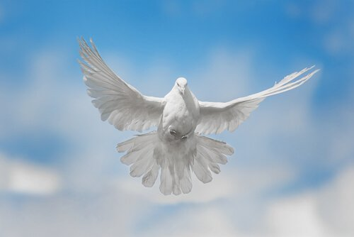 Canzoni straniere dedicate alle colombe