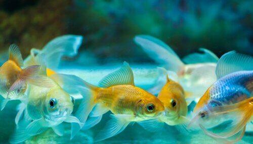 Scopriamo come prendersi cura dei pesci