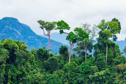 I 5 principali ecosistemi della Terra
