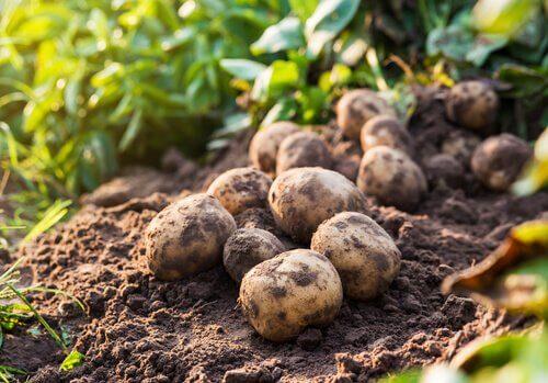 Quali sono i peggiori parassiti per l'agricoltura?