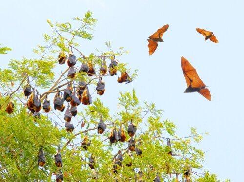 5 specie di pipistrelli
