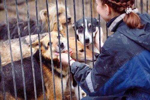 Donna gioca con cani in canile