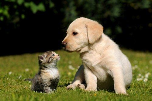 Animali domestici che non possono convivere