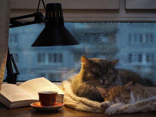 due gatti dormono su scrivania mentre piove
