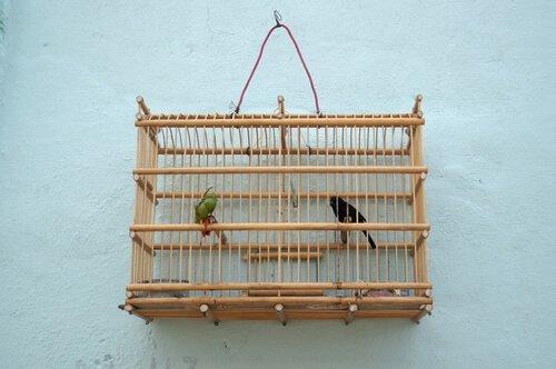 due passerotti in gabbia