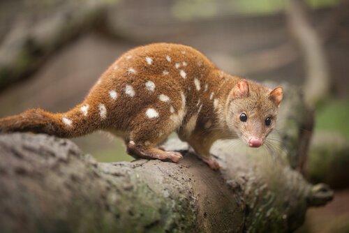 Fauna australiana: ecco gli animali endemici del paese