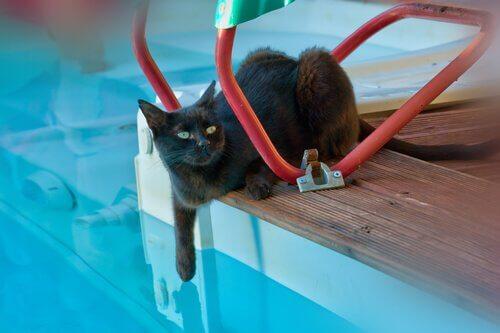 Il gatto può fare il bagno in piscina?