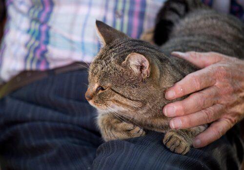 gattino sul grembo del padrone