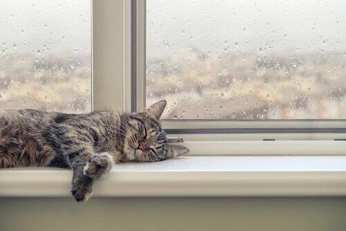 Comportamento dei gatti quando piove