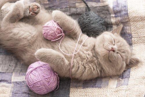 Gatto dorme tra gomitoli di lana