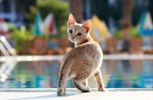 gatto vicino alla piscina