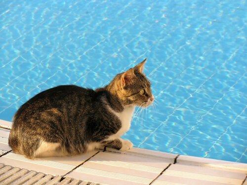 gatto sul bordo di una piscina