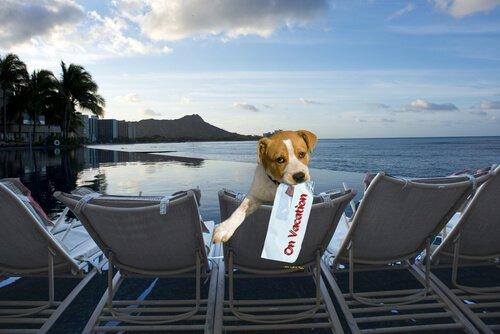 Cane in hotel in riva al mare