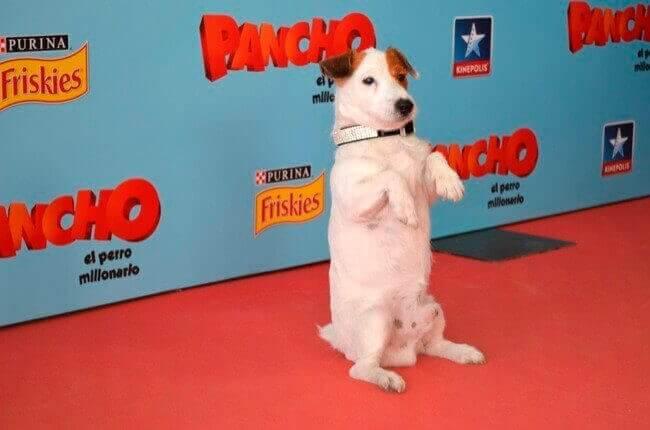 I cani più famosi del cinema e della TV