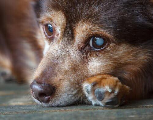 Muso di cane