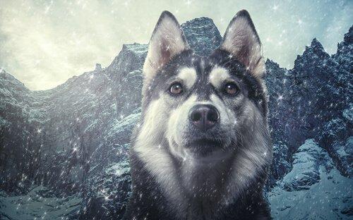 Tassonomia del cane domestico