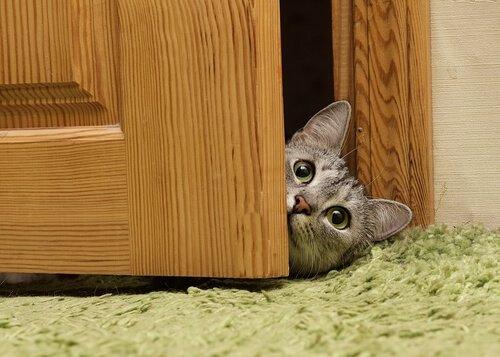 la testa di un micio sbuca da dietro una porta