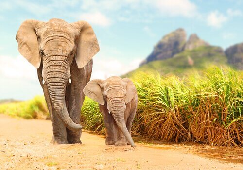 mamma elefante cammina col suo cucciolo