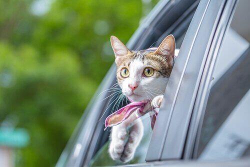micio si affaccia dal vetro della macchina