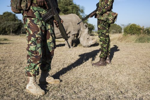 Militari con rinoceronte