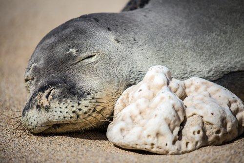 5 animali delle Hawaii più interessanti