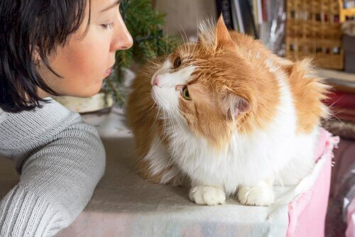 Il gatto vi ama? Ecco come saperlo