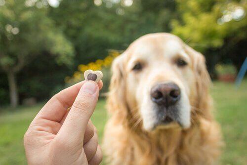 Padrone mostra croccantino al cane
