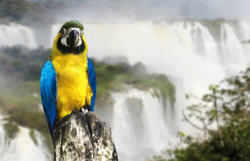 I parchi nazionali dell'Argentina