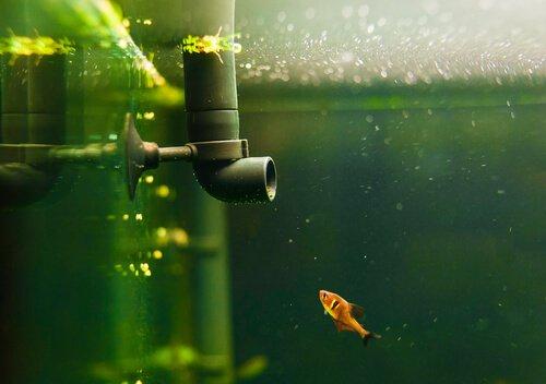 pesce nell'acquario e termostato