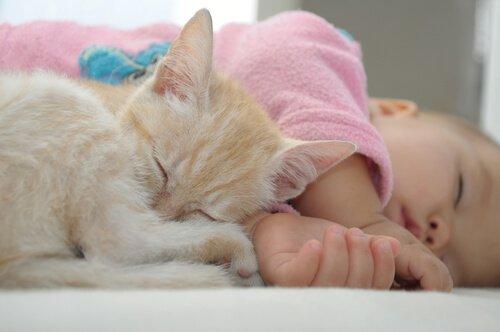 Neonata dorme con una gattina