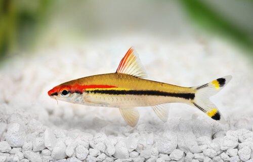 5 tipi di pinne nei pesci