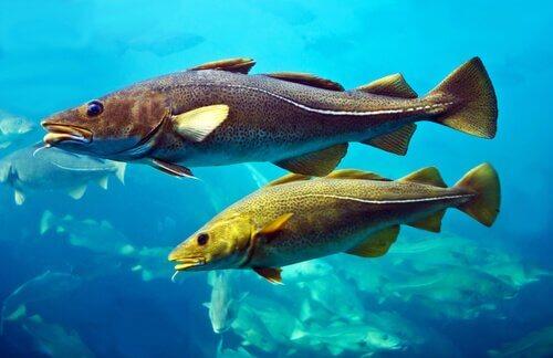 Le pinne dei pesci