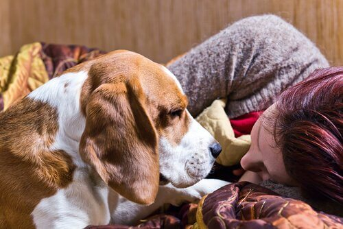 Ragazza dorme annusata da un cane segugio