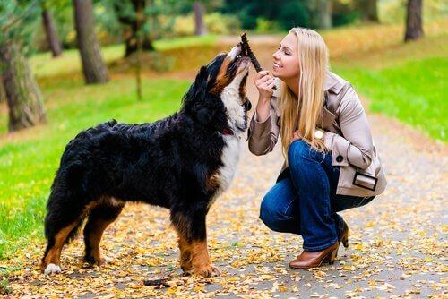 Ragazza gioca con il cane usando un bastone