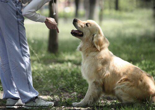 Ragazza impartisce un comando seduto al cane