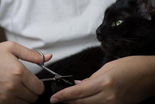 Ragazza intenta a tagliare le unghie al gatto