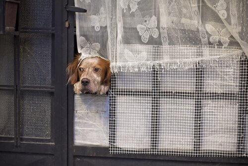 Per quanti giorni il cane può restare solo?