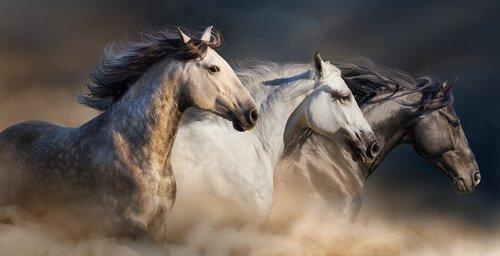 Il tetano nei cavalli