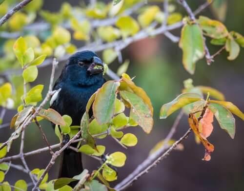 Vaccaro: avete mai visto un uccello simile?