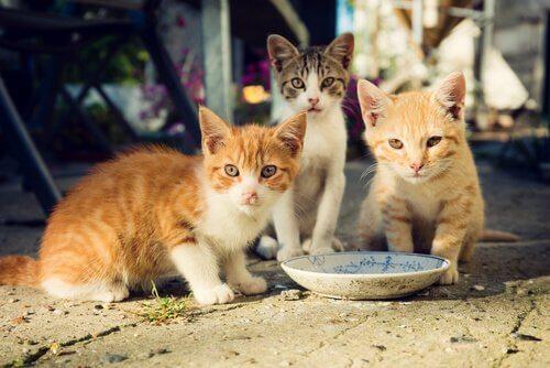 tre mici mangiano accanto a un piattino