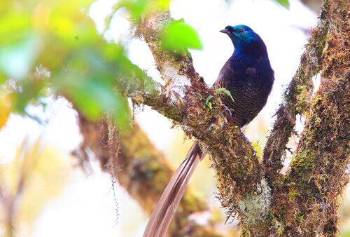 Uccello del paradiso su albero