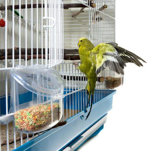 uccello nella gabbia
