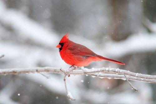 5 animali di colore rosso da conoscere