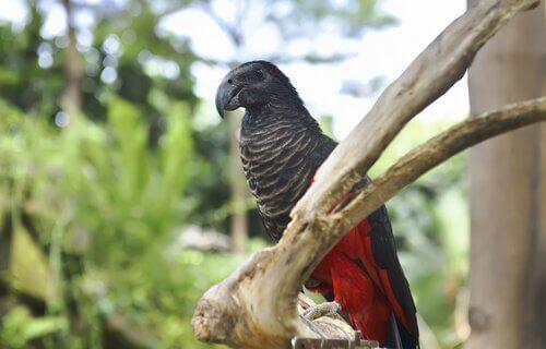 5 specie di pappagalli