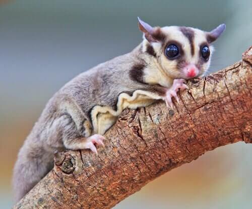 La fauna della Guinea