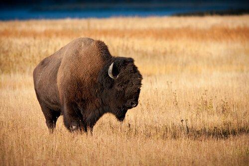 Gli animali della steppa: quali sono e caratteristiche
