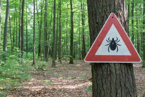 un bosco con un albero cartello divieto di parassiti